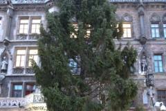 Christbaum am Marienplatz in München aus Freyung-Grafenau  2019