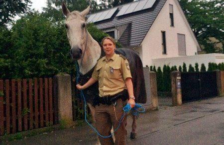 Pferd eingefangen