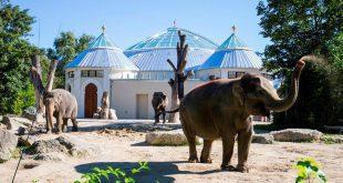Elefanten vor Elefantenhaus - Tierpark Hellabrunn in München . Foto: Marc Müller/Tierpark Hellabrunn
