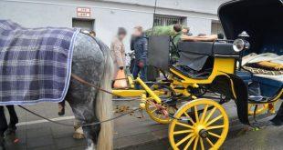 Pferdegespann mit Postkutsche verursacht Verkehrsunfall - München-Schwabing Quelle Foto Polizeipräsidium München