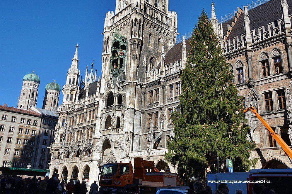 Marienplatz Weihnachtsmarkt.Der Christbaum Für Den Christkindlmarkt Am Marienplatz Steht Er