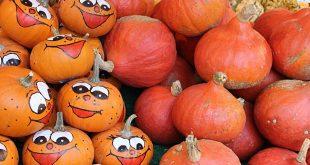 Kürbisse Halloween